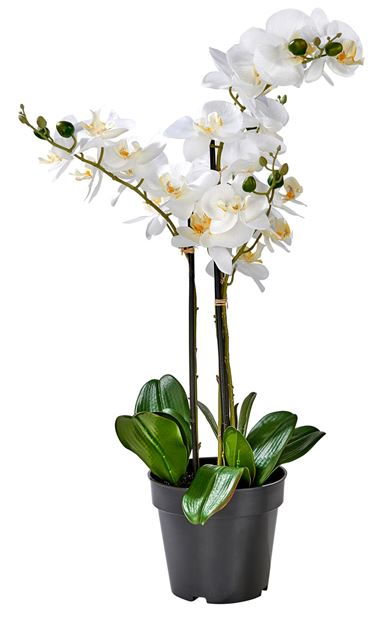 ORCHID Orchidee in pot wit L 68 cm_orchid-orchidee-in-pot-wit-l-68-cm