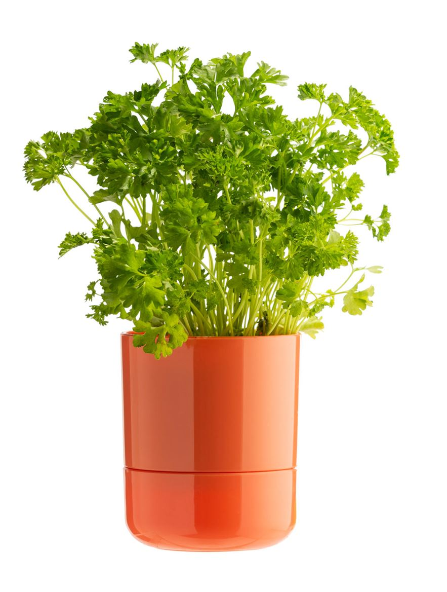 HERBO Pot à fines herbes auto-irriguant 4 couleurs orange, vert, petrol, beige_herbo-pot-à-fines-herbes-auto-irriguant-4-couleurs-orange,-vert,-petrol,-beige