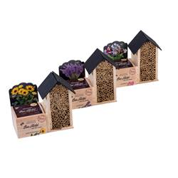 BEE HOTEL Sähset 3 Muster Diverse Farben H 16 x B 18,5 x T 8 cm